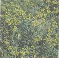 Растения руты