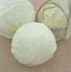 Позднеспелый сорт белокочанной капусты Завадовская