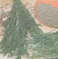 Товарная продукция укропа (молодые растения) и семена